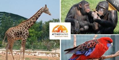 Αττικό Ζωολογικό Πάρκο Ημερήσιο εισιτήριο για ενήλικες ή για παιδιά άνω των 12 ετών για το Αττικό Ζωολογικό Πάρκο, μόνο με 7,50€!